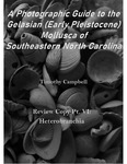 Waccamaw Mollusca Review Copy Pt. 6: Heterobranchia by Timothy Campbell