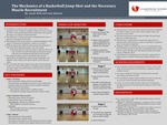 The Mechanics of a Basketball Jump Shot and the Necessary  Muscle Recruitment