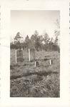 Photograph - Brittain Presbyterian Church - Watson Gravestones by Unknown